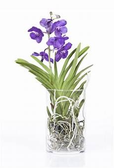 Vanda Orchidee Pflege Im Topf Und Im Glas