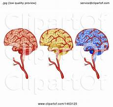 Brain Cancer Diagram by Clipart Of A Diagram Of Human Brain Cancer