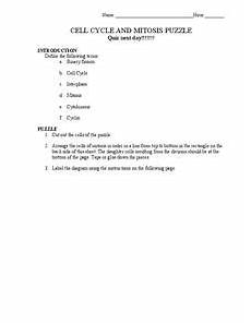 worksheets for clock 19172 cell cycle and mitosis puzzle 7th grade worksheet lesson planet