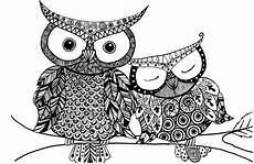 free printable animal coloring pages for adults owl