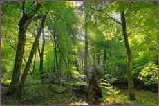 neuenburger urwald foto bild deutschland europe
