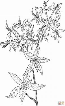 Malvorlagen Wolf Hill Wildflower Coloring Wildflower Coloring For Free