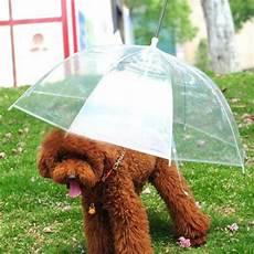 candele auto chion ombrello per cani