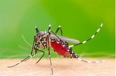 5 Ciri Nyamuk Demam Berdarah Yang Perlu Anda Kenali