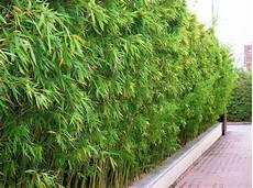 grande jardinière pour bambou bambou pour jardin pivoine etc