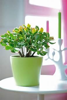 feng shui pflanzen f 252 r harmonie und positive energie im