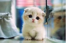 50 Gambar Kucing Lucu Dan Imut Sedunia Kucing Co Id