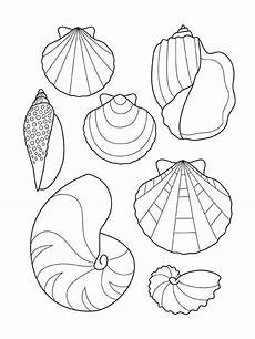 shell coloring pages tats muschel