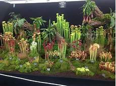 Botanical Wonders The Carnivorous Plants Grown In A