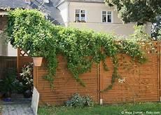Gartenabtrennung Zum Nachbarn - ideen sichtschutz zum nachbarn