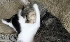 Ihre Katze Bringt Einen Neuen Spielgef 228 Hrten Mit Nach