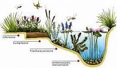 Pflanzen Am Teich Teichzonen Garten Teich