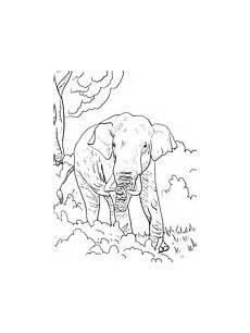 Ausmalbilder Indischer Elefant Ausmalbilder Elefanten Malvorlagen Kostenlos Zum Ausdrucken