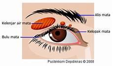 Mata Pada Manusia Anatomi Dan Bagian Bagian Mata Serta