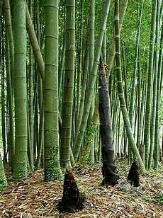 Moso Bamboo Diary 1 In Between