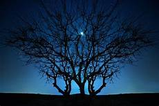 einsamer baum unter blauem nachthimmel stockfoto