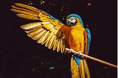 animalerie salon de provence animalerie pour acheter poissons et oiseaux 224 salon de provence baobab jardinerie cr 233 ative