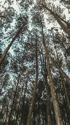 Hutan Pinus Yogyakarta Dengan Gambar Gelombang Laut