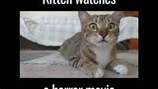 Katze Hat Angst Vor Einem Horrorfilm