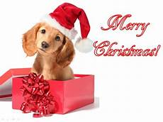 ccute animals merry christmas