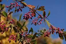 jedes monat ein strauch naturschutzbund k 252 rt im november