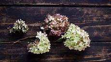 deko mit getrockneten hortensien hortensien trocknen h 252 bsche tischdeko selber machen