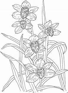 Window Color Malvorlagen Orchideen Orchideengewaechs Wenige Ausmalbild Malvorlage Blumen