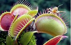 carnivorous plants that eat animals talk and chats all