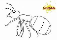 ausmalbilder insekten das beste ausmalbilder igel