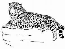 animals of mexico coloring pages 17091 desenhos de animais para colorir