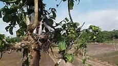 Memantau Burung Memberi Makan Anaknya
