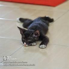 Gambar Kucing Rindu Koleksi Gambar Hd