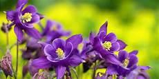 dove si comprano i fiori di bach vendita fiori commestibili dove si comprano di
