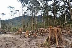 Penebangan Liar Merajalela Hutan Bener Meriah Kritis