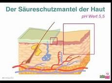 Aufbau Der Haut Und S 228 Ureschutzmantel