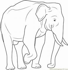 indian elephant coloring page free elephant coloring