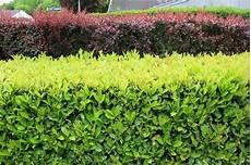 Arbustes 224 Croissance Rapide Place Des Jardins Le