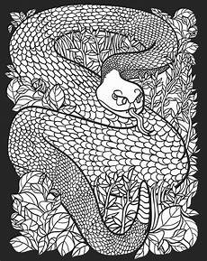 childhood education nocturnal animals coloring pages free