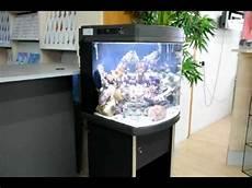 meerwasser aquarium hs 60 mit hqi led und komplettem