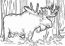 Kostenlose Malvorlagen Elch Malvorlage Elch Tiere Ausmalbilder Kostenlos Herunterladen