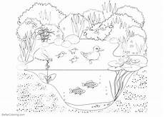 free coloring pages pond animals 17411 printable pond habitat coloring page sketch coloring page