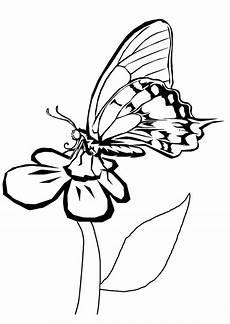 Malvorlage Schmetterling Blume Malvorlage Schmetterling Auf Blume Kostenlose