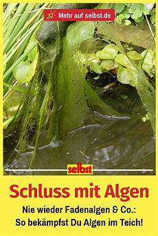 algen im teich algen im teich teichpflanzen teich