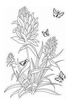 Ausmalbild Schmetterling Wiese Ausmalbilder Schmetterlinge Gratis Malvorlagen De