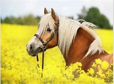 Horses: Beautiful Horse Horses Wallpaper Backgrounds Free