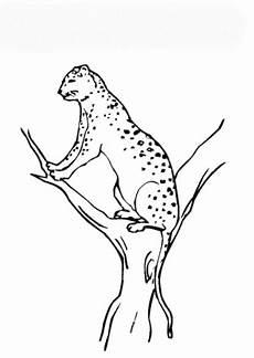 Ausmalbilder Leopard Ausdrucken Sch 246 Ne Ausmalbilder Malvorlagen Leopard Ausdrucken 1