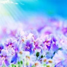 iphone purple flower wallpaper purple flowers wallpapers wallpaper cave