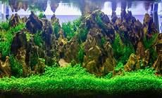 aquarium deko ideen aquarium dekoration 187 sch 246 ne ideen tipps tricks aquarium aquarium aquascape und aquarium deko