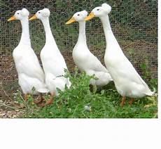 Bebek Dan Taksonominya Spammer