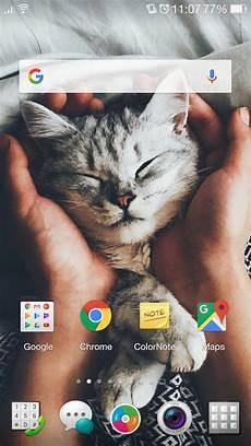Lock Screen Wallpaper Cat